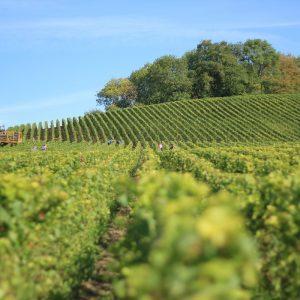 crop-cropland-farm-360013